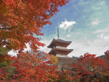 Pagoda in Autumn Color, Kyoto, Japan Photographic Print by Shin Terada