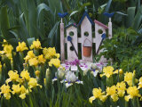 Garden Irises Grow Around Small Bench, Pennsylvania, USA Fotografie-Druck von Nancy Rotenberg