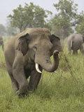Elephant Greeting, Corbett National Park, Uttaranchal, India Photographic Print by Jagdeep Rajput