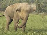 Elephant Dust Bathing, Corbett National Park, Uttaranchal, India Photographic Print by Jagdeep Rajput