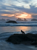 Seagull Silhouette on Coastline, Bandon Beach, Oregon, USA Photographic Print by Nancy Rotenberg