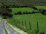 Scenic Dirt Road with Wildflowers, County Cork, Ireland Photographic Print by Marilyn Parver