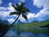 Opunohu Bay, Moorea, French Polynesia Photographic Print by Douglas Peebles
