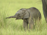 Asian Elephant,Corbett National Park, Uttaranchal, India Photographic Print by Jagdeep Rajput