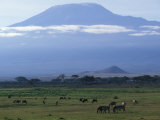Zebra and Wildebeest under Mt. Kilimanjaro, Amboseli National Park, Kenya Photographic Print by Paul Souders