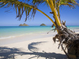 Palm shadow on Lanikai Beach, Mokulua islands, Hawaii Photographic Print by Douglas Peebles