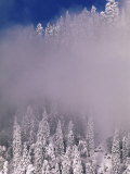 Snow Covered Spruce Trees, Switzerland Photographic Print by Rolf Nussbaumer