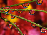 Garden Flowers Reflecting in Dewdrops Photographic Print by Steve Terrill