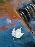 Leaf Floating in Fall Reflections, Bond Falls, Upper Peninsula, Michigan, USA Fotografie-Druck von Nancy Rotenberg