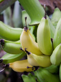 Green and yellow bananas Photographic Print by Douglas Peebles