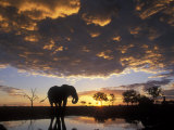 Elephant Silhouetted at Marabou Pan, Savuti Marsh, Chobe National Park, Botswana Photographic Print by Paul Souders