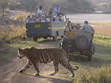 Royal Bengal Tiger Delighting The Viewers, Ranthambhor National Park, India Photographic Print by Jagdeep Rajput