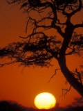 Silhouetted Tree Branches, Kalahari Desert, Kgalagadi Transfrontier Park, South Africa Photographic Print by Paul Souders