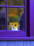 Window with Sunflowers in Vase Photographic Print by Steve Terrill