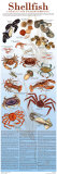 A Seafood Lover's Guide to Sustainable Shellfish Choices Art by Brenda Gillespie