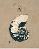 Vintage Linen Nautilus Posters par  Regina-Andrew Design