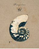 Vintage Linen Nautilus Posters by  Regina-Andrew Design