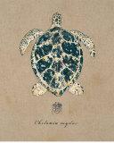 Vintage Linen Tortoise Print by  Regina-Andrew Design