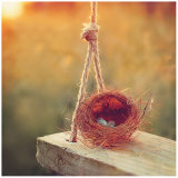Swing and Nest Prints by Mandy Lynne