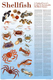 A Seafood Lover&#39;s Guide to Sustainable Shellfish Choices Posters by Brenda Gillespie