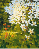 Summer Clematis Prints by J. Charles