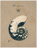 Regina-Andrew Design - Vintage Linen Nautilus Obrazy