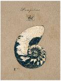Vintage Linen Nautilus Prints by  Regina-Andrew Design