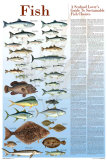 A Seafood Lover's Guide to Sustainable Fish Choices Posters by Brenda Gillespie