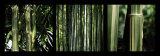 Bambous Affiches par Laurent Pinsard