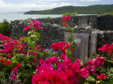 Flowering Bougainvillea & Ruins, Chateau Dubuc, Martinique, French Antilles, West Indies Photographic Print by Scott T. Smith