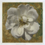 Golden Bloom II Giclee Print by Megan Meagher
