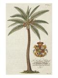 Porter Design - Kokosová palma Digitálně vytištěná reprodukce
