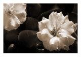 Gardenia II Art by Jeanne Michel