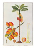 Penang Betle Nut Tree Giclee Print by  Porter Design