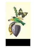 Finch on Flower of the Banana Art by  Porter Design
