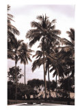 Coconut Grove, Candidasa Prints by  Porter Design
