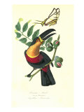Toucan on Nutmeg Giclee Print by  Porter Design