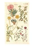 Geraniaceae 3 Prints by  Porter Design