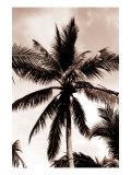Sepia Palm 3 Reproduction procédé giclée par  Porter Design