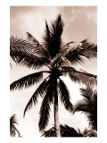 Sepia Palm 3 Poster by  Porter Design
