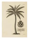 Coqueiro Impressão giclée por  Porter Design