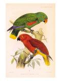 Joseph Smit Parrots Plate 26 Poster by  Porter Design
