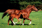 Mare & Foal Plakaty