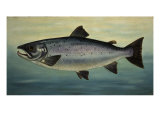 Atlantic Salmon Giclee Print by  Porter Design