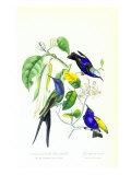 Hummingbird on Orange Tree Affiches par  Porter Design
