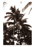 Sepia Palm 1 Giclee Print by  Porter Design
