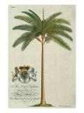 Palmier royal Reproduction giclée Premium par  Porter Design
