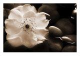 Gardenia I Giclee Print by Jeanne Michel