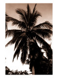 Sepia Palm 4 Prints by  Porter Design