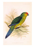 Joseph Smit Parrots Parrot Plate 46 Prints by  Porter Design
